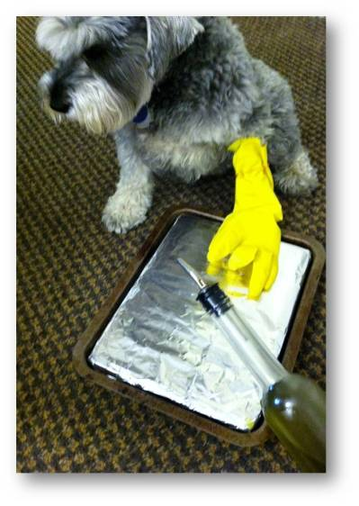 Schazam, who is more conscientious about  sanitary cooking practices than Schnitzel, uses a glove when spreading oil on the baking sheet.